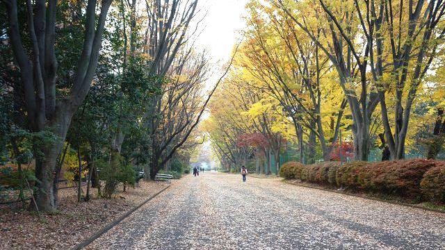 秋の武蔵国